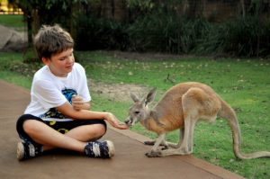 Caversham Wildlife Park kangaroo feeding boy