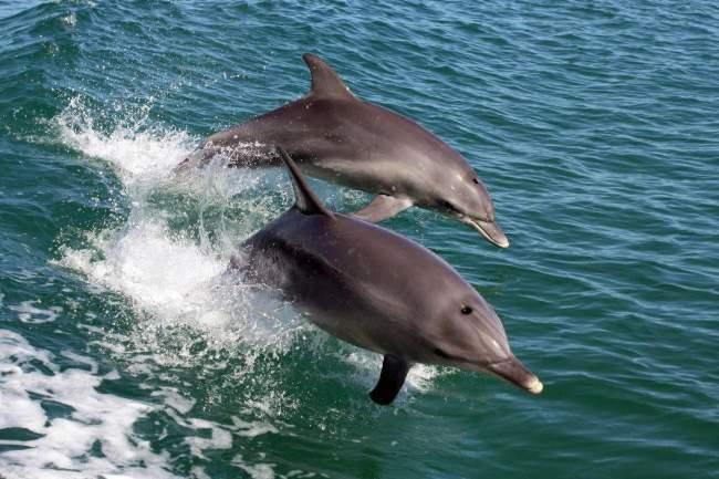 Dolphin cruise mandurah2