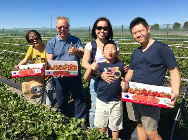 Strawberry fruit picking tour