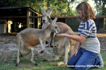 Kangaroo-feeding-at-Caversham-Wildlife-Park_small